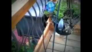 Spazzed Kitten Taunts 14.5yr Dalmatian