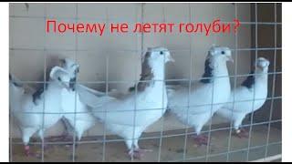 3 причины по которым ваши голуби не хотят или не могут лететь.