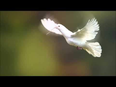 Lisa Lynne - Morning Dove
