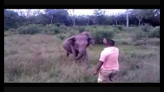 Taming Wild Elephants by Hand - Sri Lanka