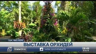 В Ботаническом саду Нью-Йорка проходит выставка орхидей