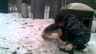 собака ругается матом