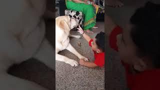 A baby boy vedu playing with dog. Cute vedu cute dog.