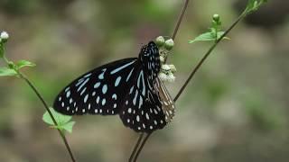 Balpakram - Mystical Land of the Eternal Winds