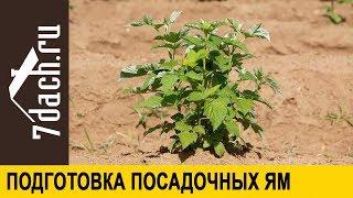 подготовка посадочных ям для смородины, крыжовника и малины. Важно знать разницу! - 7 дач