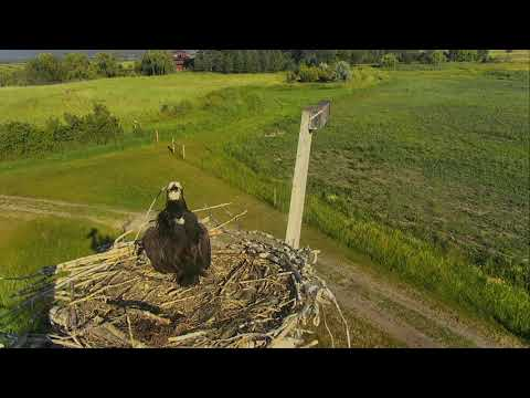 Osprey Nest - Charlo Montana Cam 07-09-2017 17:54:49 - 18:54:49