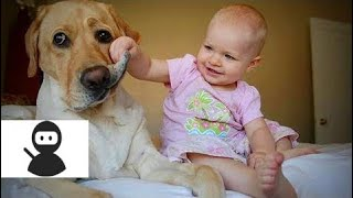 Babies and Dogs 🐶👶 Babies and Dogs Funny Moments (Part 2) [Epic Laughs] new