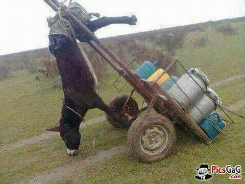 Most Funny Donkey Fail Videos 2016 Animals