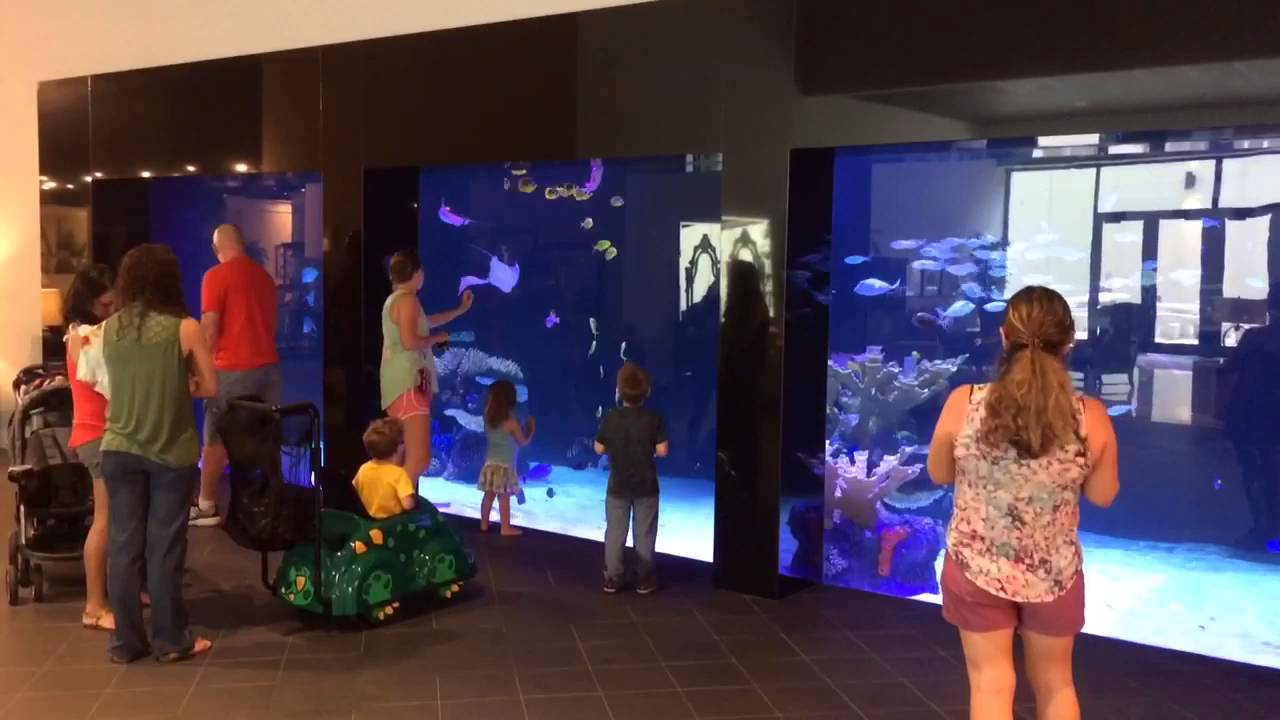 30 000 Gallon Aquarium At Gallery Furniture In Houston Youtube