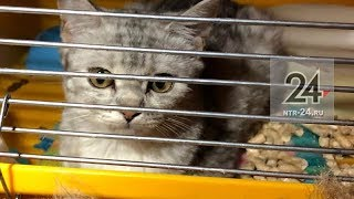 В Нижнекамске может закрыться волонтерский приют для бездомных животных