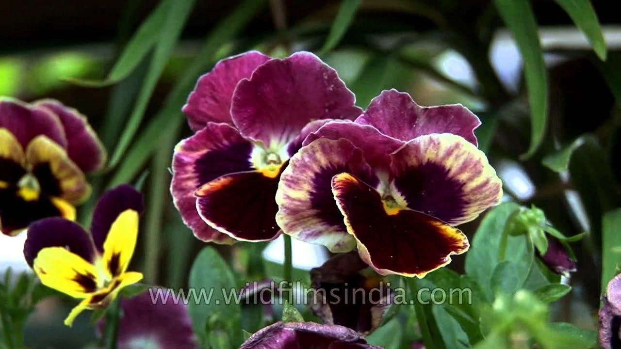 Flowers Name In Hindi English And Marathi Hd Image Flower Rose In 2020 All Flowers Name Indian Flower Names Flower Chart