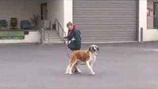 Sit Means Sit Training Blind Dog At Veterinarian School