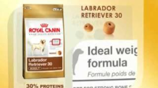 Royal Canin Labrador Retriever Nutrition