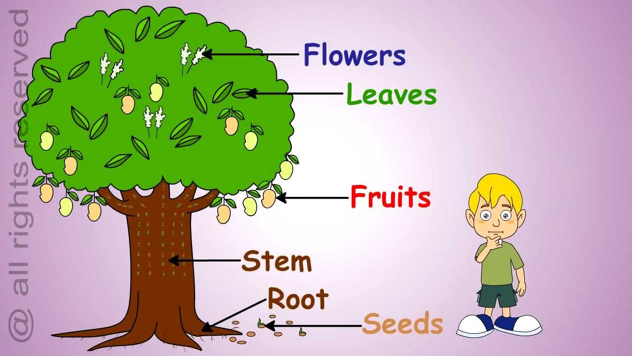 What Plants Can Grow Water