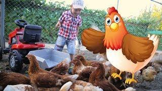 Играем с трактором. На ферме у бабушки кормим курочек