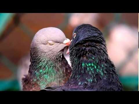 Птица в окно: примета. Приметы: птица стучится в окно