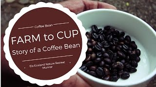 Making a cup of coffee from some farm fresh beans