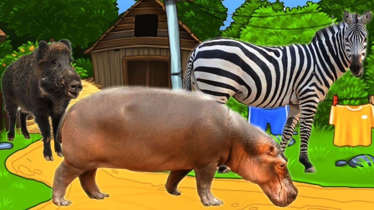 Bài 5: Động vật hoang dã và màu sắc