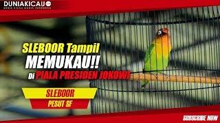 Video SLEBOOR Tampil Memukau Di Piala Presiden JOKOWI download MP3, 3GP, MP4, WEBM, AVI, FLV Oktober 2018