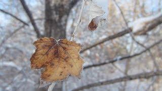 Nature: Winter 2014
