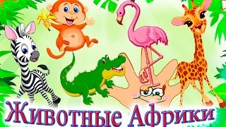 Животные Африки обучающее видео для малышей песенка для детей на русском