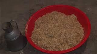 Kompost Hazırlama İstiridye Mantarı