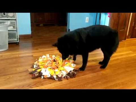 Schipperke digs through snuffle mat