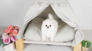 부산 강아지분양 미유펫…