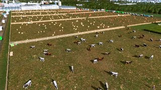 Pastwiska - Cities: Skylines S07E66