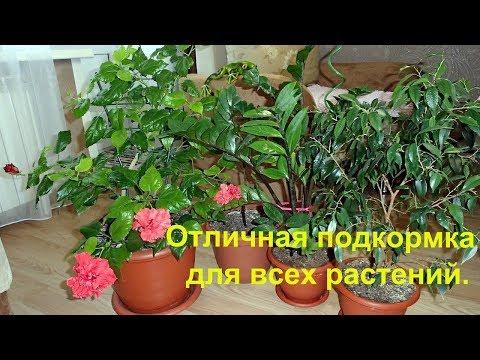 Вопрос: Какие комнатные растения нельзя полить раствором алоэ?