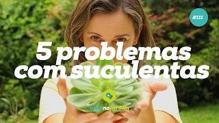 5 problemas comuns com suculentas