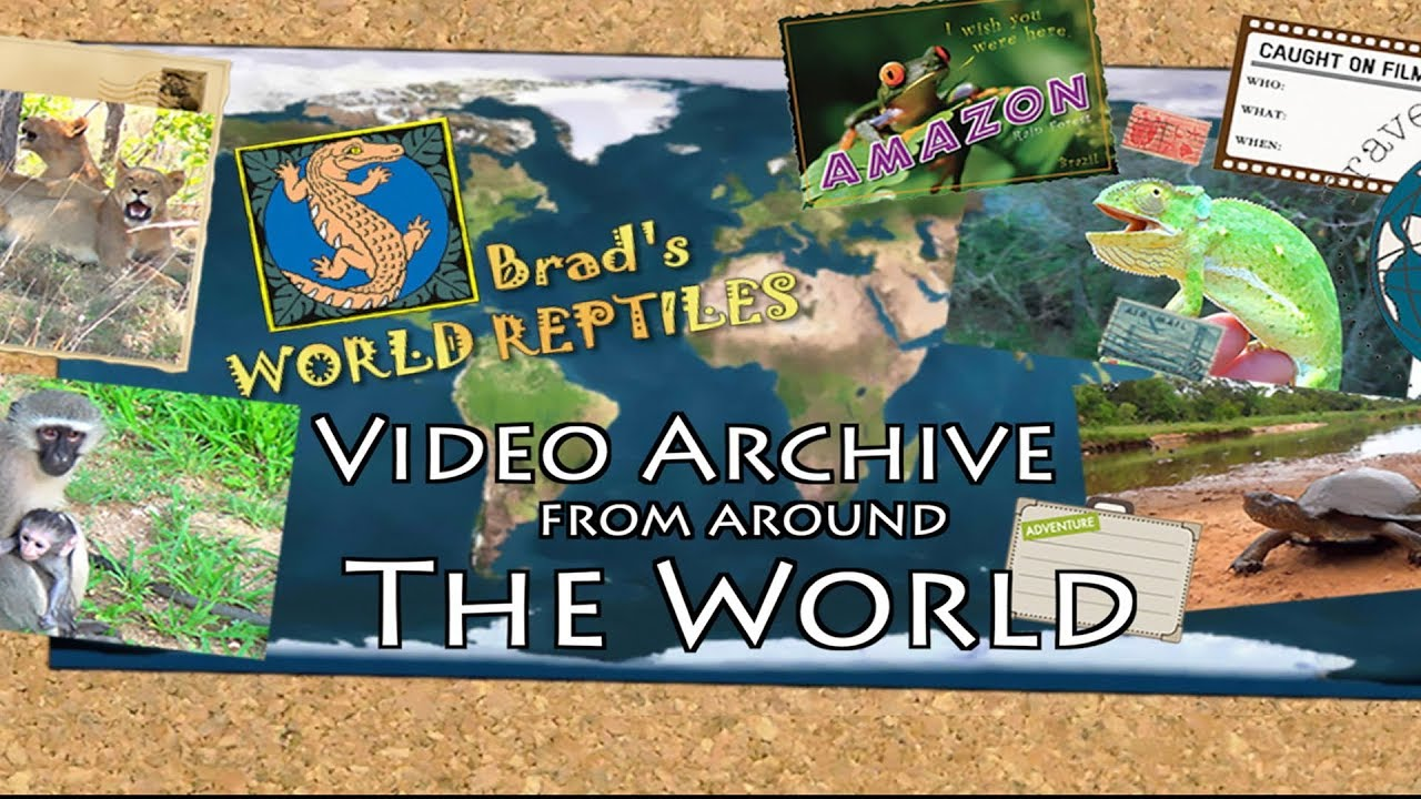 Welcome to Brad's Video Archive