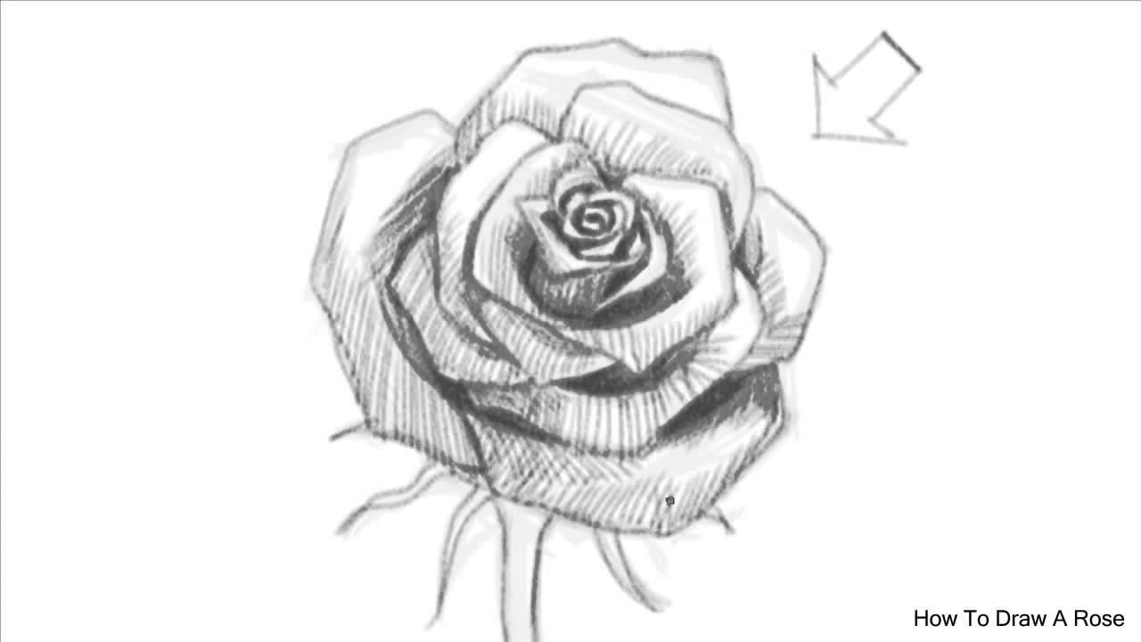 How to draw an open rose how to draw a rose youtube