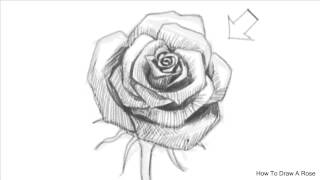 How to Draw an Open Rose | How to draw a Rose(How to Draw an Open Rose | How to draw a Rose How to Draw an Open Rose | How to draw a Rose How to Draw an Open Rose | How to draw a Rose --- This ..., 2015-02-03T08:04:14.000Z)