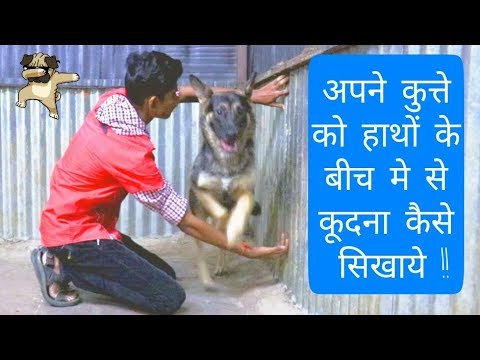 How to train a dog to jump trough a hoop or between your hands (Hindi) |Dog training in Hindi |