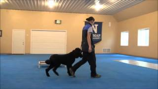 Frisco (standard Poodle) Trained Dog Video Minneapolis