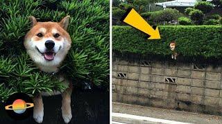 10 psów, które utknęły w dziwnych miejscach