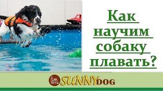 Как научить собаку плавать? Учим собаку плавать и любить воду!