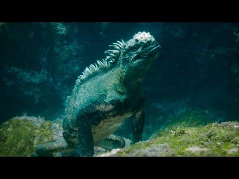 Watch Godzilla-like sea creature use razor-sharp teeth