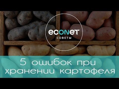 5 ошибок при хранении картофеля | ECONET.RU