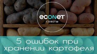 видео Как хранить картофель