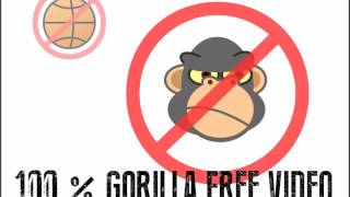 Test of Divided Attention - Two Visual Stimuli - 100% gorillafree