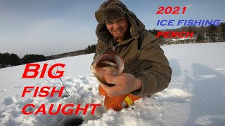 Ice Fishing Jumbo Perch BIG FISH CAUGHT