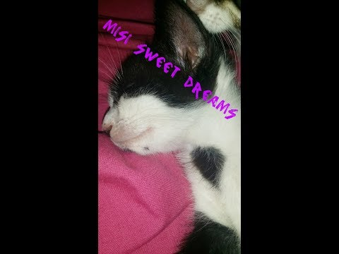 Sleeping Baby Cat Dreaming With Milk