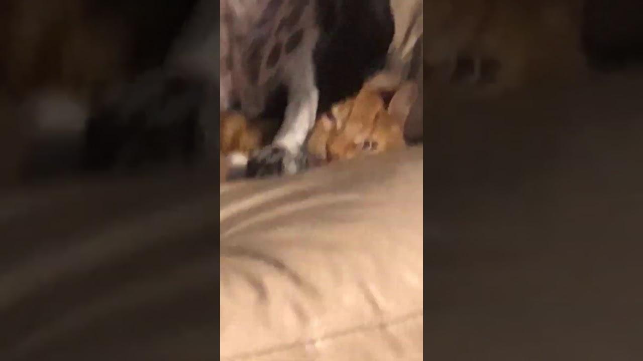 тебе, собака садится на кота гифка это время
