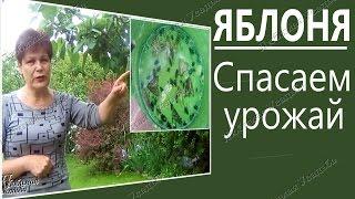 видео Борьба с вредителями яблони