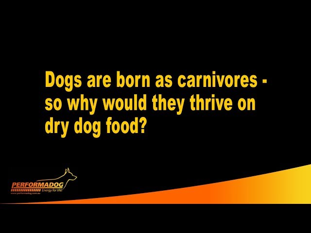 Dogs are born as carnivores, so why would they thrive on dry dog food? - Performadog
