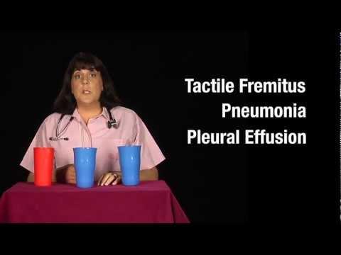 Tactile Fremitus: Cups Demonstration