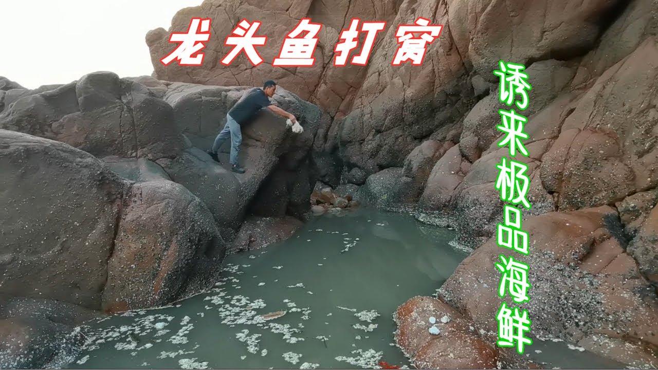 【小郭赶海】一袋龙头鱼丢进2米深坑,3天后抽干小伙激动不已,竟引来多种野货