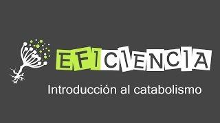 INTRODUCCIÓN AL CATABOLISMO. Fermentación Respiración Aerobia y Anaerobia